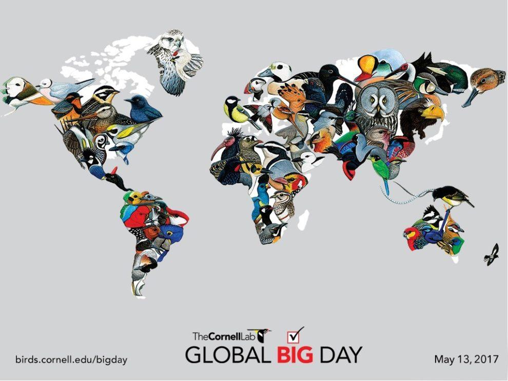 Global Big Day 2017