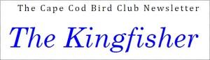Kingfisher Newsletter
